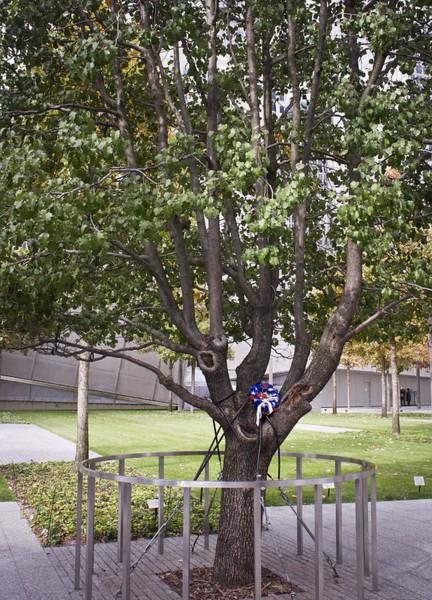 Tribute Photograph - Survivor Tree by Teresa Mucha