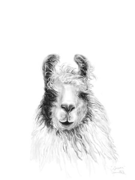 Llama Drawing - Susan by K Llamas