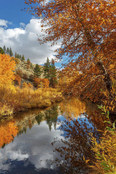 Wall Art - Photograph - Susan River Autumn Reflections by James Eddy