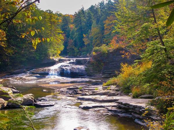 Swallow Falls State Park Wall Art - Photograph - Swallow Falls by Dan Lease