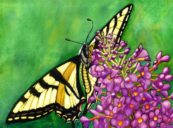 Painting - Swallowtail 1 by Catherine G McElroy