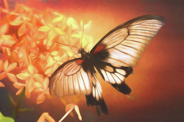 Photograph - Swallowtail Butterfly by Susan Rissi Tregoning