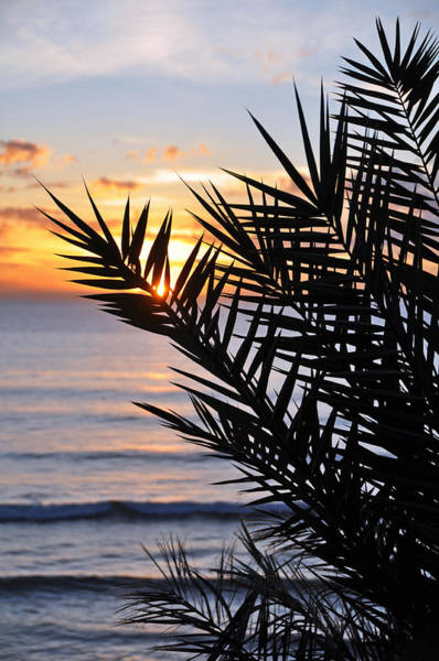 Wall Art - Photograph - Swamis Palm by Kelly Wade