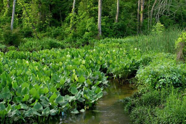 Photograph - Swamp Creek by Buddy Scott