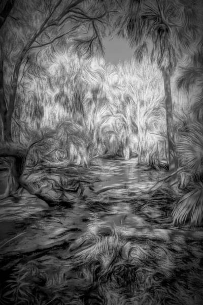 Photograph - Swamp Dream by Jim Cook