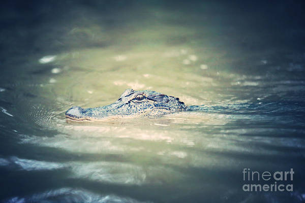 Photograph - Swamp Gator Blues by Carol Groenen