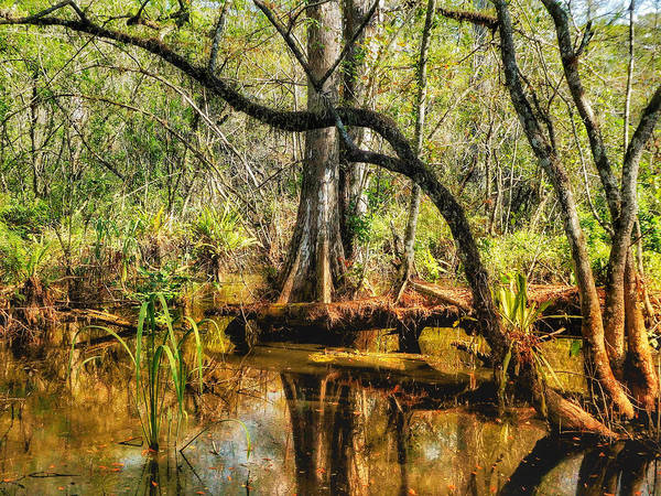 Red Wall Art - Photograph - Swamp Life II by Kathi Isserman