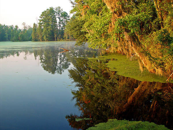 Swamp Pond Art Print by Michael Whitaker
