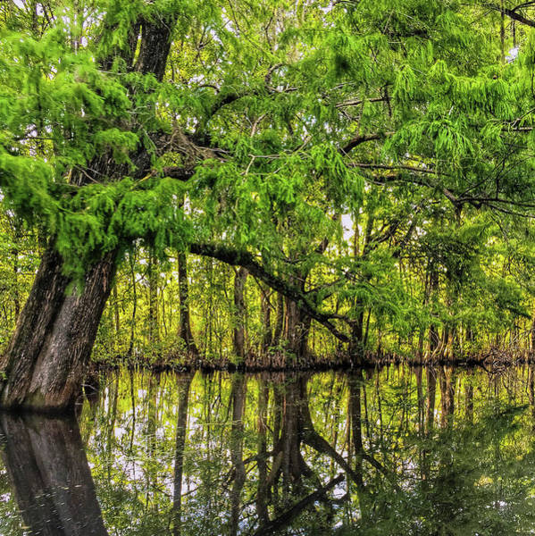 Airboat Photograph - Swamp Reflections by Todd Wise