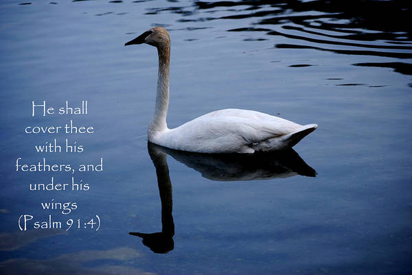 Psalms Photograph - Swan - Bible Quote  by Michelle  BarlondSmith