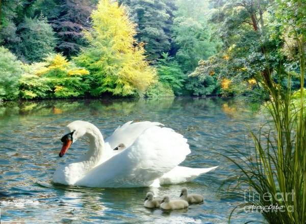 Pyrography - Swan And Cygnets by Morag Bates