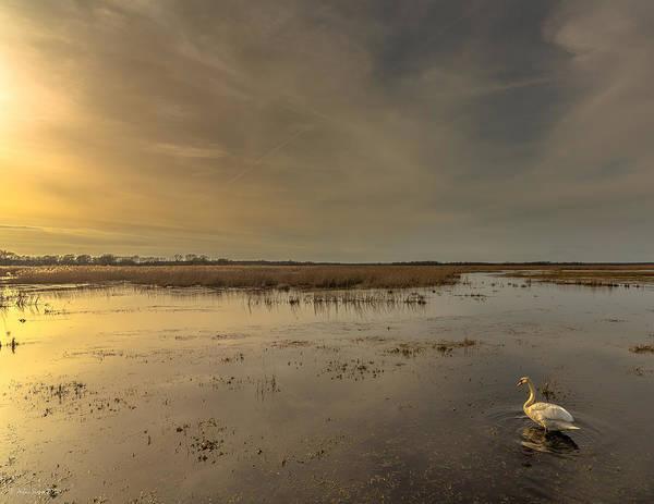 Photograph - Swan At Sunset by Julis Simo