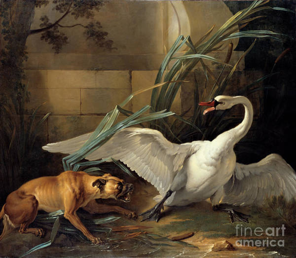Painting - Swan Attacked By A Dog by Celestial Images