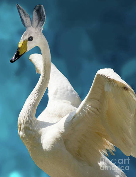 Swan Photograph - Swan Bunny by Juli Scalzi