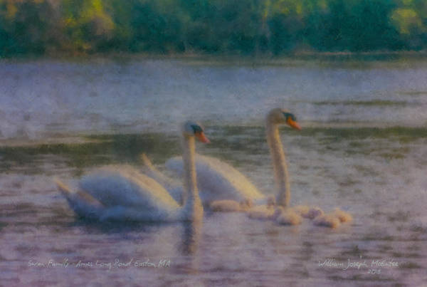 Painting - Swan Family At Sunset by Bill McEntee