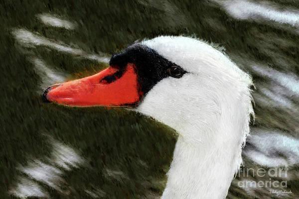 Photograph - Swan Headshot by Blake Richards