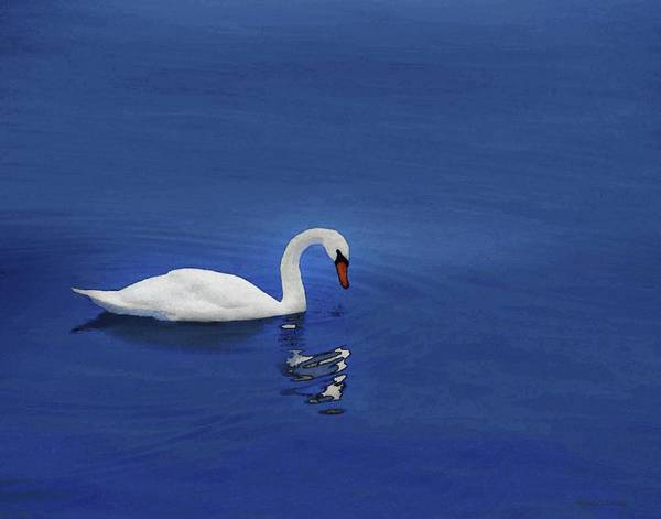 Photograph - Swan In Water by Coleman Mattingly