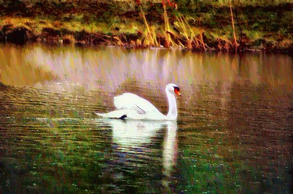 Photograph - Swan Lake by Bill Cannon