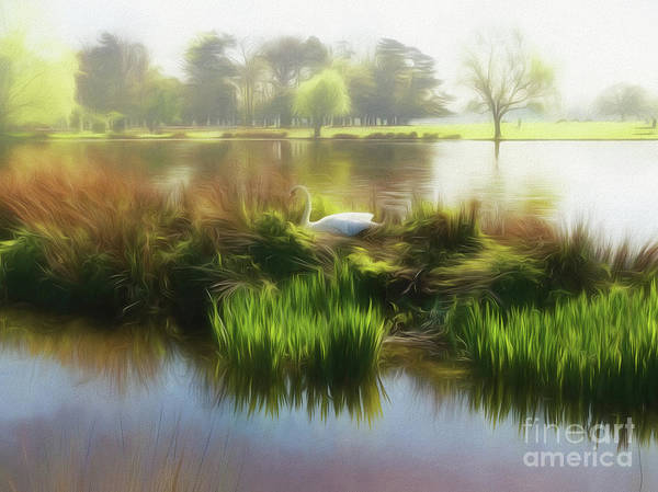 Photograph - Swan Lake by Leigh Kemp