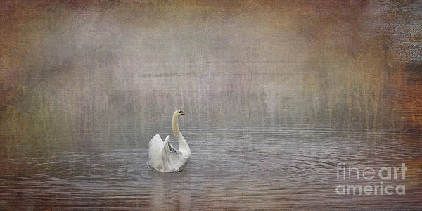 Liz Digital Art - Swan Lake by Liz Alderdice