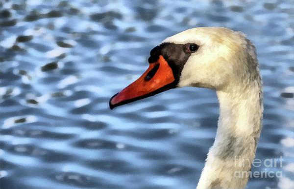 Painting - Swan Portrait Paint by Odon Czintos