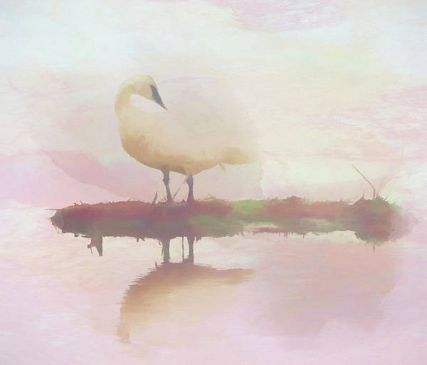 Wall Art - Painting - Swan Reflection by Dan Sproul