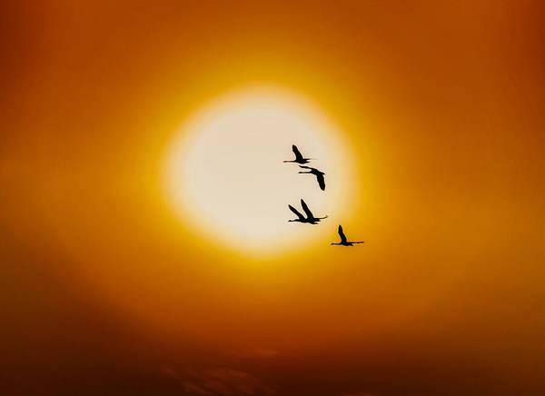 Sunset Digital Art - Swan by Super Lovely