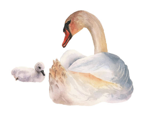Wall Art - Painting - Swan Sweetness by Alison Fennell