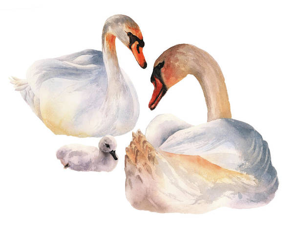 Wall Art - Painting - Swan Symphony by Alison Fennell