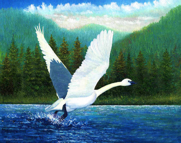 Painting - Swan Takeoff by Douglas Castleman
