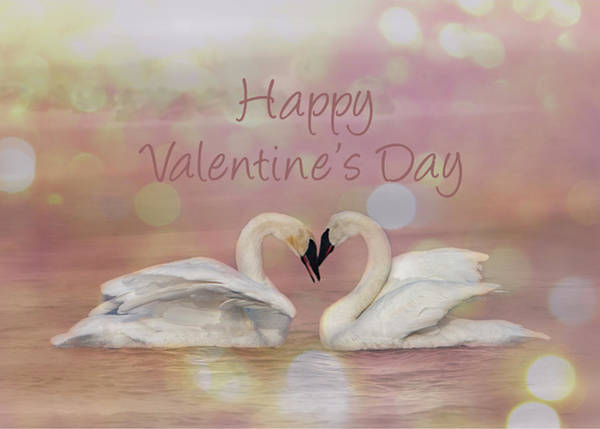 Photograph - Swan Valentine by Patti Deters