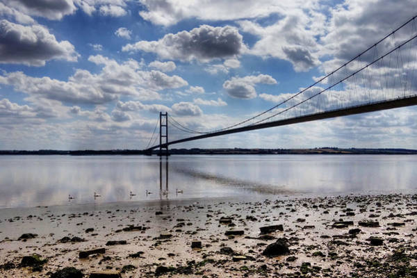 Photograph - Swans At Humber Bridge by Sarah Couzens