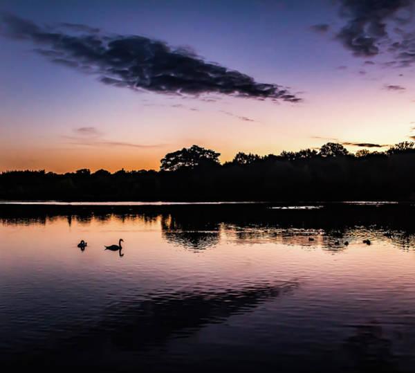 Swans At Sunrise Art Print