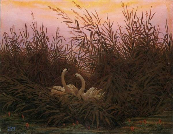 Painting - Swans In The Reeds At Dawn by Caspar David Friedrich