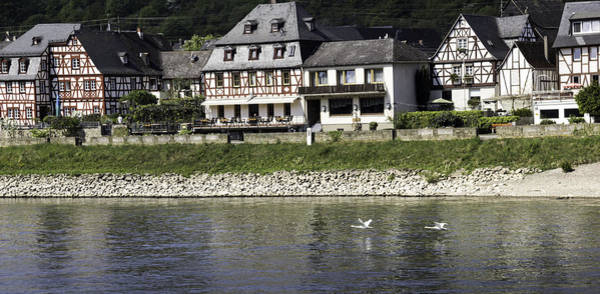 Germania Photograph - Swans On The Rhine In Spay Germany by Teresa Mucha