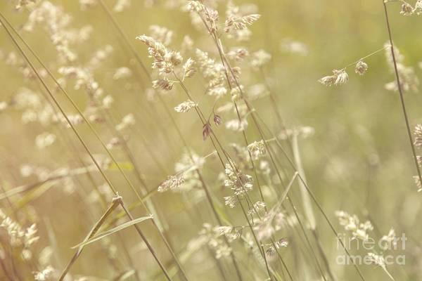 Photograph - Swaying by Karin Pinkham