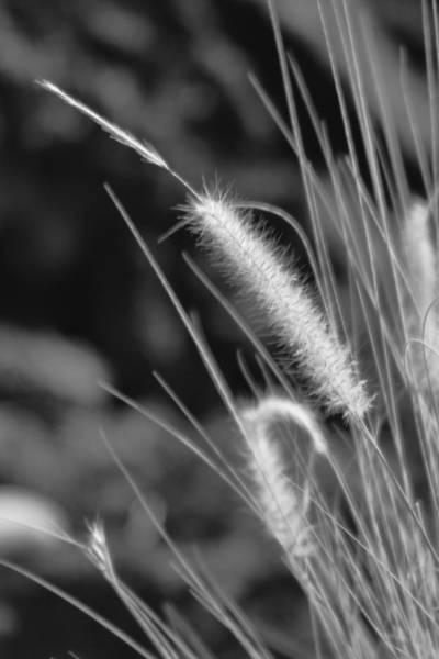 Photograph - Swaying  by Pamela Walton