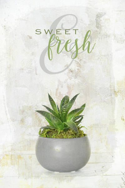 Photograph - Sweet And Fresh by Jai Johnson