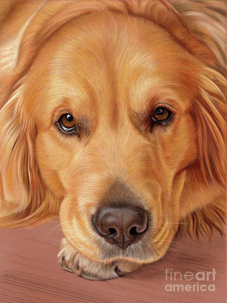 Golden Retriever Mixed Media - Sweet As Honey by Donna Mulley