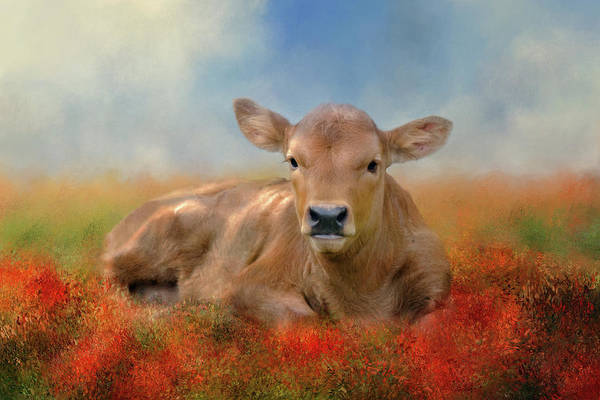 Bovine Photograph - Sweet Baby by Lana Trussell