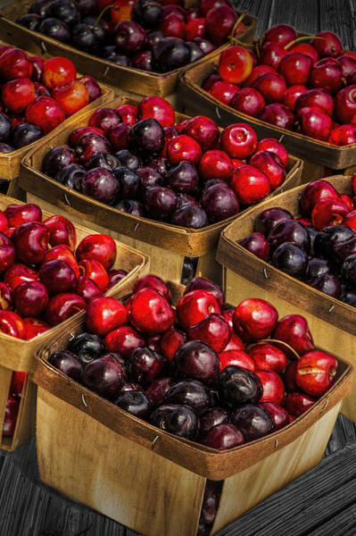 Photograph - Sweet Cherries From A Cherry Orchard At The Cherry Point Farm Market by Randall Nyhof