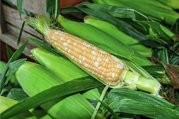 Photograph - Sweet Corn by Todd Klassy