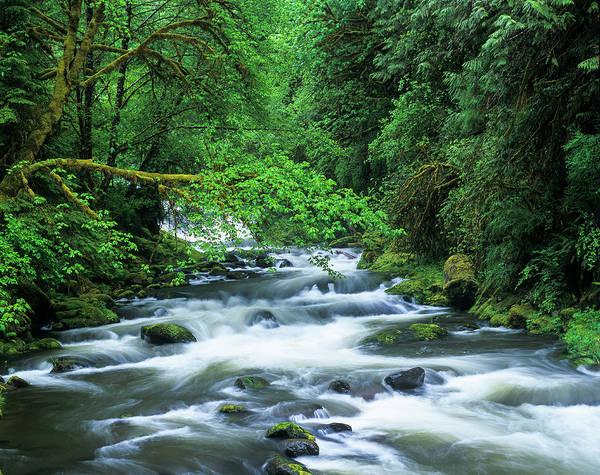 Photograph - Sweet Creek by Robert Potts
