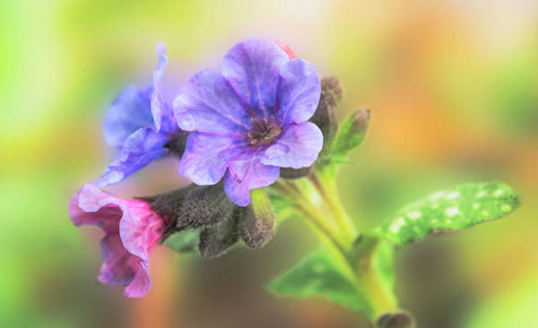 Photograph - Sweet Delicate Flowers by Garvin Hunter