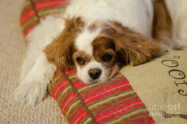 Photograph - Sweet Dog Face by Dale Powell