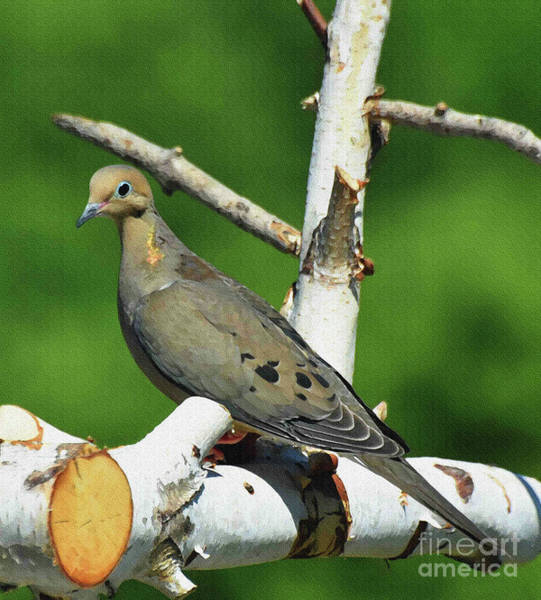 Wall Art - Painting - Sweet Dove by Diane E Berry