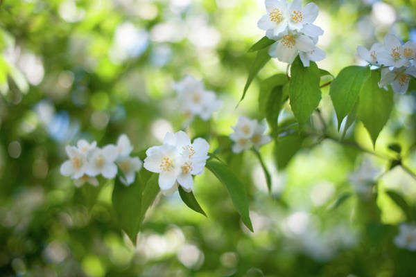 Photograph - Sweet Fragrance Of Spring by Jenny Rainbow