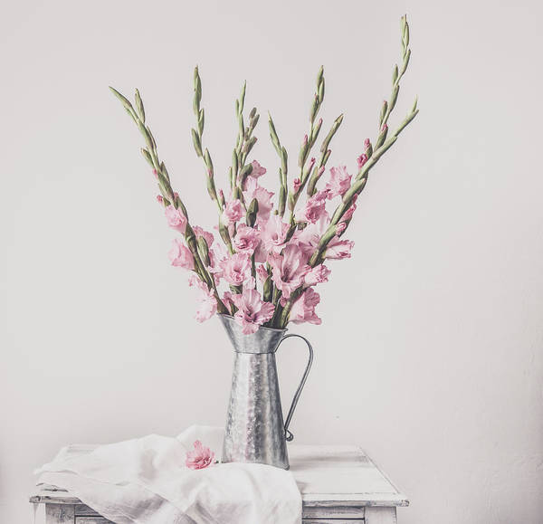 Photograph - Sweet Gladiolus by Kim Hojnacki