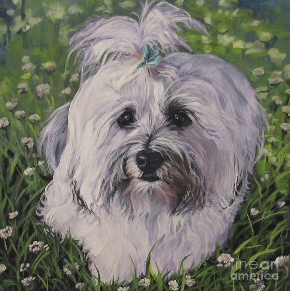 Wall Art - Painting - Sweet Havanese Dog by Lee Ann Shepard