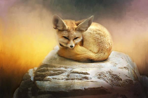 Photograph - Sweet Lil Fennec Fox by Lynn Bauer